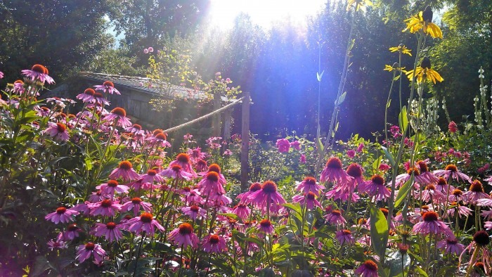 The Garden at La Laiterie, Phiolin